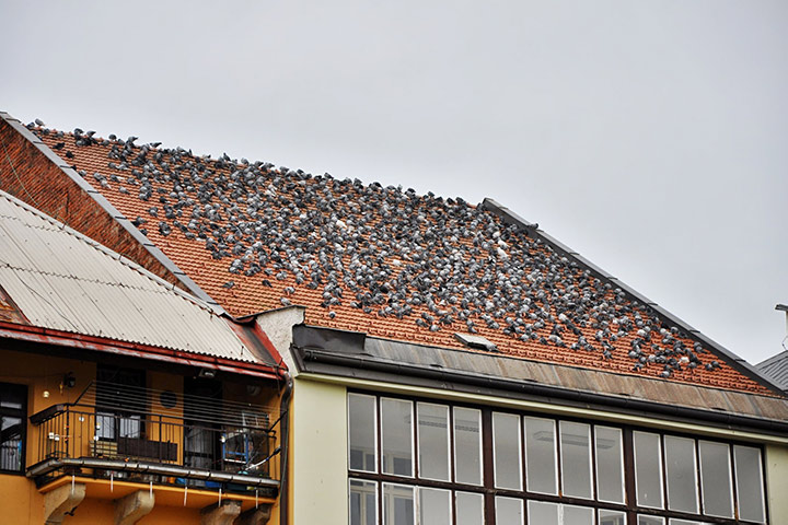 A2B Pest Control are able to install spikes to deter birds from roofs in Barking.