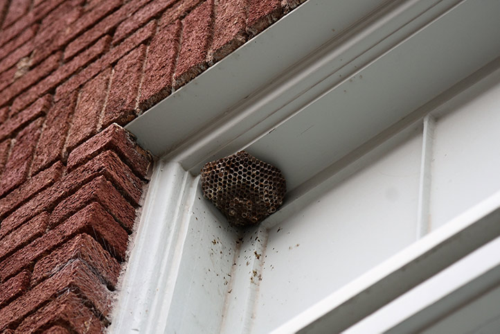 We provide a wasp nest removal service for domestic and commercial properties in Barking.